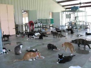 Alternate EOC center space usage as a cat shelter