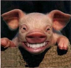 Pigsmiling