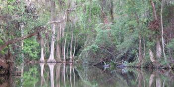 Doracanal trees web