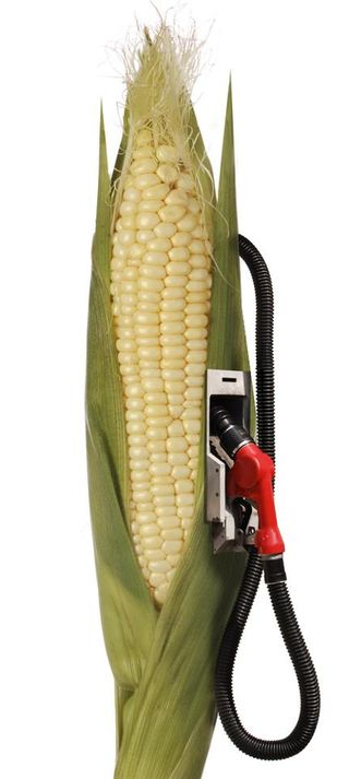 EthanolCornStalk