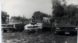 Copy of Mustangs 3 panorama